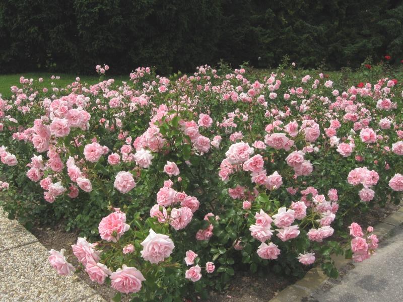 Home_and_Garden_2.jpg