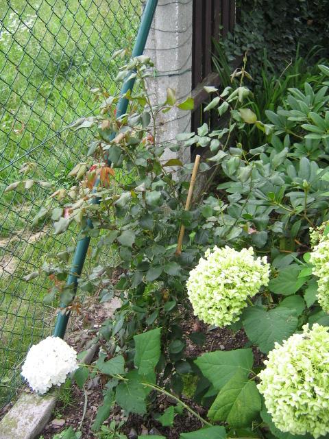 kompost_005-353bf42a0b7a8c8e9922c6cdcd0a366f.jpg
